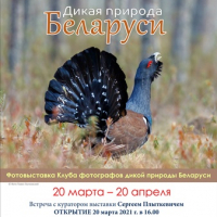 "Photo exhibition ""Wildlife of Belarus"""